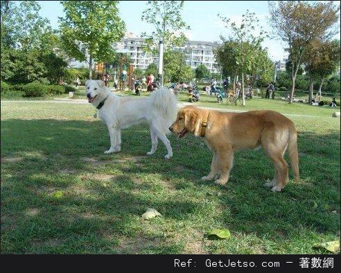 給狗狗做絕育的五個理由